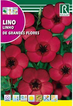 Egynyári virágok : Díszlen piros Plants, Year Round Flowers, Plant, Planets