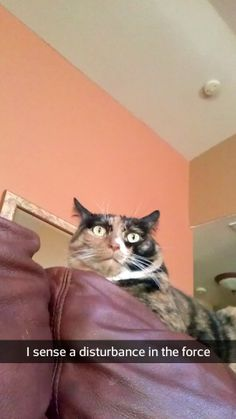 Funny cat snapchat