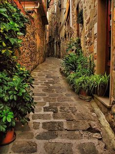 リグーリアの狭い路地 - イタリア