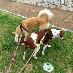 #Paseo con #Monty #Tuno 03/18 * * #Disfrutar #enjoying #enjoy #disfrutamos #Disfrutandoeldía #DisfrutandoAndo #Fotos #fotografia #photography #Foto #Photo #Mascotas #Mascottes #Pets #Mascot #Dogs #Perros #Shaggy #Furry #Hairy #Ilovedog #Dog #Gatos #Cats #gato  #Peludos #Ilovecats #Noalabandono #adoptanocompres #RincóndelaVictoria