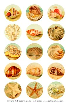 seashell collage sheet  free printable