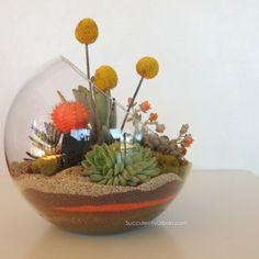 succulent-terrarium_0100