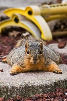 squishyyy squirrrel