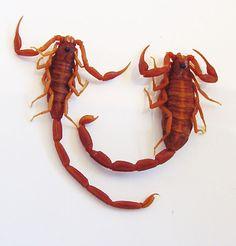 .scorpion