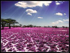 Kenya Meadow of Life