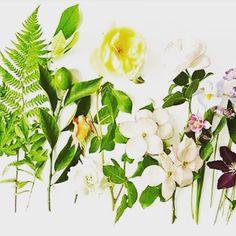 Plants, Beauty, Beleza, Flora, Cosmetology, Plant, Planting