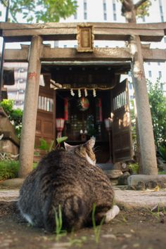 Google+  A Japanese cat worships at a shrine.  #神社ねこ  #猫です 毛の生えたまんじゅうではありません。 #Shrine cat #It is not a steamed bun hairy cat.