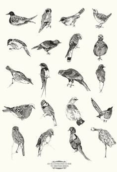 Illustrated Guide to British Birds by Chrysa Koukoura Illustration, 50 EUR Art Photography, Animal Art, Sketches, Illustration, Drawings, Art, Ink, Bird Illustration, Bird Prints