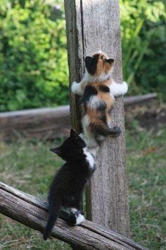 I help you. push!