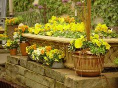 Fleurs de jardin d'été – de belles idées d'arrangements floraux en pots