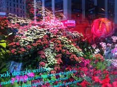 """Look deeply within this flower made of flowers and understanding unfolds."" Macy's Flower Show window, New York City. Macy's is a block away from my house, but the line to the Flower Show tent is so long, I am not sure I'll get to see it!"