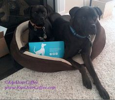 K9sOverCoffee | Missy & Buzz letting you know where to go for healthy, all natural doggie chews & treats: BestBullySticks.com!