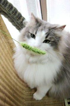 Meowy moustache.♥♥♥