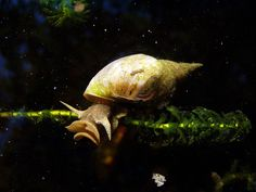 Dipping Plants to Eliminate Snails