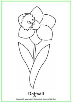 Daffodil colouring page - a simple colouring page for spring or for  St.David's Day, 1st March