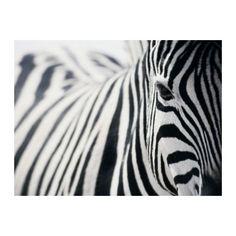 IKEA - PJÄTTERYD, Afbeelding zonder lijst, Motief van Richard Lewisohn.Het motief krijgt extra diepte en leven doordat het op een hoge kwaliteit schildersdoek is gedrukt.Het schilderij steekt een beetje uit van de muur omdat het motief om de rand van het canvas verdergaat.