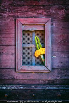Yellow flowers stuck on a windowed door with grate- ©Silvia Ganora Photography - All Rights Reserved  #bookcovers #flowers