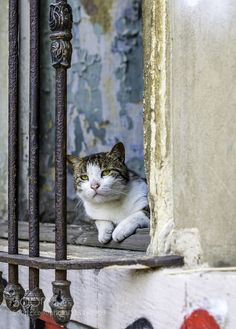 Istanbul cat by latypova1. For more photos: http://photos-cats-kittens.tumblr.com @go4fotos