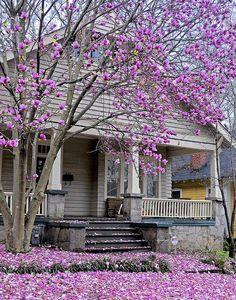 magnolia purple