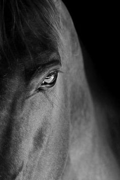 eye of a wise horse