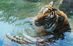 Happy International Tiger Day!
