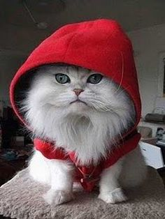 little kitty red riding hood <3