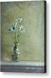 Simply Daisies Photograph by Priska Wettstein - Simply Daisies Fine Art Prints and Posters for Sale
