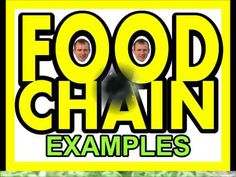 FOOD CHAIN SONG by Heath - YouTube  Great explanation of energy, consumers, producers, and decomposers.  Good for 4th grade science and younger grades