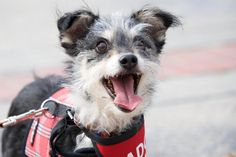 Meet Frazier, an adoptable Terrier looking for a forever home. If you're looking for a new pet to adopt or want information on how to get involved with adoptable pets, Petfinder.com is a great resource.