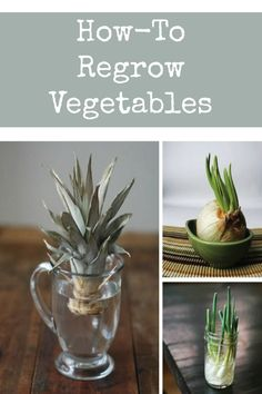 Complete Guide To a Low Cost Vegetable Garden ! How to regrow vegetables from scraps ! Indoor Vegetable Gardening, Hydroponic Gardening, Container Gardening, Indoor Hydroponics, Gardening Vegetables, Urban Gardening, Regrow Vegetables, How To Plant Vegetables, Herbs Garden