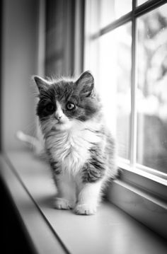 """""""One small cat changes coming home to an empty house to coming home."""" --Pam Brown"""
