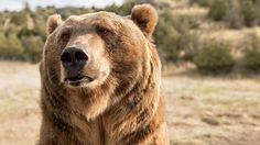 Why Delisting the Grizzly May Just Be a Good Thing | Outside Online