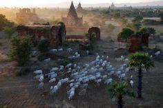 Bagan. by Oleg Gudkov