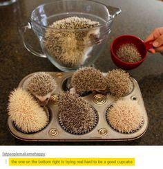 Awww they're little hedgehogs!!!