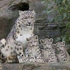 Mom looks a bit tired...