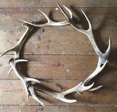 A Wreath Of Stag Horns