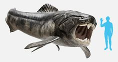 Dunkleosteus (dunkle bone) - Prehistoric Creatures Ripped Directly from Your Nightmares Sea Monster | Cracked.com