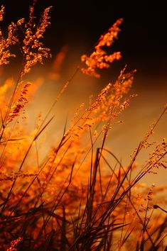 Topaz is the birthstone for November and when I started doing a little digging I found out that more specifically it's Orange Topaz. Orange Aesthetic, Belle Photo, Orange Color, Orange Shades, Orange Twist, Fields, Grass, Beautiful Pictures, Scenery