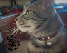 Cat Tag Collar, Cat Collar, Leather Cat Collar, Custom Cat Collar, Pet ID Tag, Cat Nametag, 3/8 Inch Wide Cat Collar by BrooksLeatherworks on Etsy https://www.etsy.com/listing/263819350/cat-tag-collar-cat-collar-leather-cat