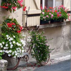 window covers, flowers and old bicycle... whats not to love!