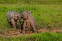 <p>In fact, there are many kind alternatives to the cruel animal attractions you can find in Thailand, you just have to know where to look! </p>