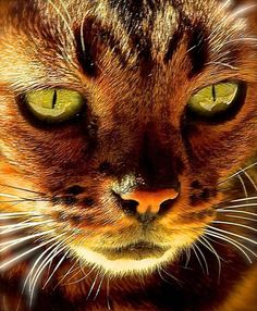 """""""It is in their eyes that their magic resides."""" --Arthur Symons"""