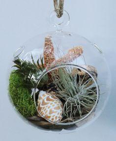 Glass Globe air plant terrarium