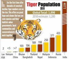 There is a good news for wildlife lovers.India now has 70 percent of world's tiger population - See more at: http://goo.gl/yB72ey