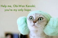 Kody actually likes this one! O.O He usually doesn't like things that make fun of Star Wars...