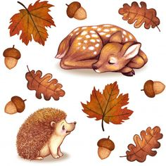 Hedgehog Illustration, Autumn Illustration, Watercolor Leaves, Watercolor Paintings, Animal Drawings, Cute Drawings, Wallpaper Kawaii, Illustration Inspiration, Leaf Drawing