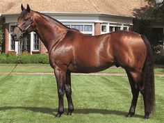 Lemon Drop Kid - such a beautiful horse, as close to perfect conformationally as it gets. Also a great sire!