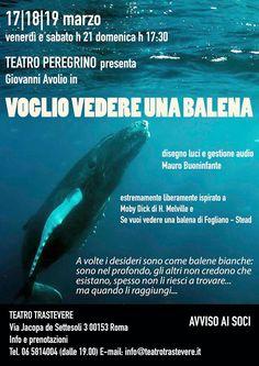 Voglio vedere una balena a Roma » Il Blog di Eleonora Marsella