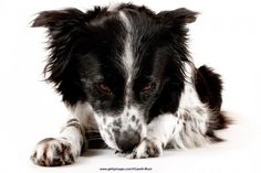 Why Does My Dog Obsessively Lick His Paws? | WOOFipedia by The American Kennel Club