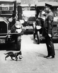"""Un policier respectueux """"  It was a sunny summer afternoon, July 29, 1925. Harry Warnecke, a photographer for the New York News, got a phone tip that a cat trying to carry its kittens home was tying up traffic because a policeman had stopped the cars..."""